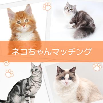 ネコちゃんマッチング